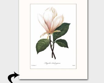 Magnolia Art w/Mat (Southern Home Wall Decor, Vintage White Botanical Print) Matted Redoute Flower