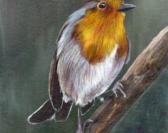 SALE Bird Painting Art European Robin  Bird SFA Wildlife Original hand painted bird acrylic painting by Australian Artist Janet M Graham