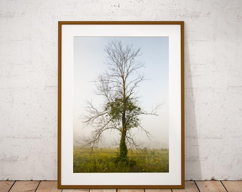 Tree Print, Fine Art Print, Wall Art, Nature Print, Tree and Fog, Professional Print, Living Room Decor, Office Art,