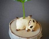 Sprouting magic bean - cafe latte bean