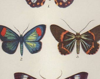 """1896 Colorful Antique Butterfly Print Vintage Insect Print Matted 8 X 10"""""""