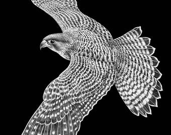 Peregrine Falcon Owl Ink Drawing