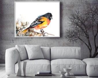 Baltimore Oriole Bird art print, bird watercolor painting print, Bird art, Bird Wall art Print