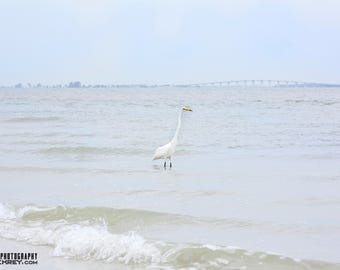 Photograph Print of a Tropical White Bird Standing in the Ocean in Front of a Bridge on a Bright Blue Sunny Day in Florida Sunshine Egret