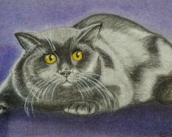 Cat chat-cat pencil pastel drawing cat cat British KH hangover