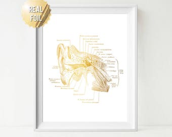 Ear Art Anatomy Gold Foil Print - ENT Doctor Speech Therapy Speech Pathology Art - Audiology Ear Anatomy Medical Art - Hearing Ear Canal