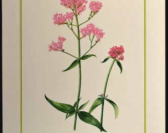 Pink Wild Flower Print Nature Wall Decor Botanical Art
