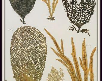 Sea Plants Vintage Home Decor Art Print Natural Curiosities Algae Print Coastal Decor