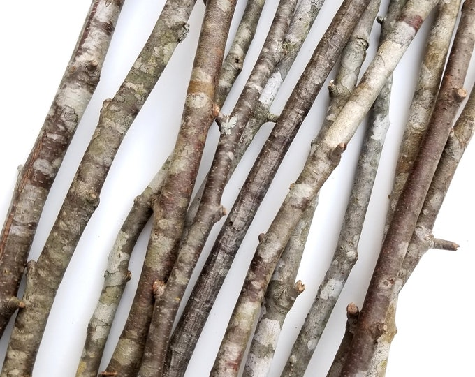 Decorative Wood Branches Limbs Sticks Vase Fill Table Wedding Centerpiece River Birch Oak Maple Holly
