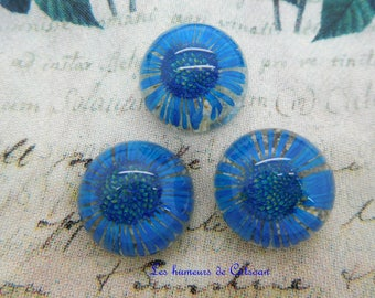 1 cabochon resin with dried flower Daisy Blue 20 mm