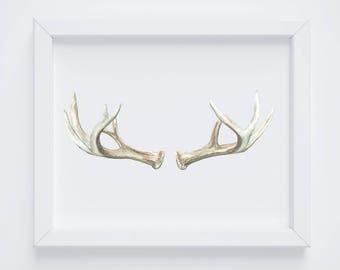 Large Antler PRINT- Antler Painting - Antler Watercolor Painting - Antler Painting - Antler Art - Deer Antlers - Southwestern art -