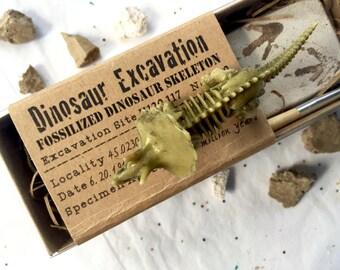 Set of 5 Dinosaur Excavation Kits