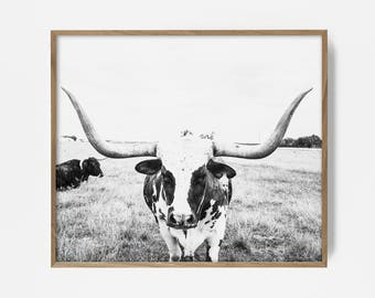 Stuffed longhorn wall decor