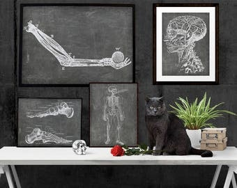SET of 4: Doctor's Office Art, Anatomical Printables, Chalkboard Medical Illustrations, Skeleton Illustration, Radiology Art,Musculoskeletal