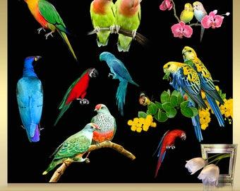 10 Tropical Birds Clip Art Vol. 1 - Birds Clipart - Parrot clipart - exotic Birds - Parrot Clip Art - Instant Download - png files
