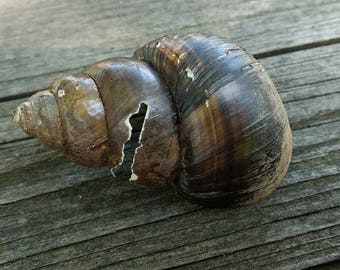 Broken Craft Snail Shells