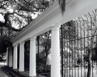 Savannah, Georgia gardens, black and white