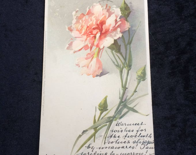"""Catherine Klein Postcard, Artist Signed, Pink Carnation, Swiss Stamp 1911, 5.5"""" x 3.5"""", Writing on Both Sides, Good Condition"""