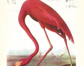 Flamingo Audubon print - Florida Scenery  framable print -  for beach decor, bird print, swamp creatures, 1930s retro aviary