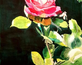 Rose in the Sun: watercolor 58 x 38 cm
