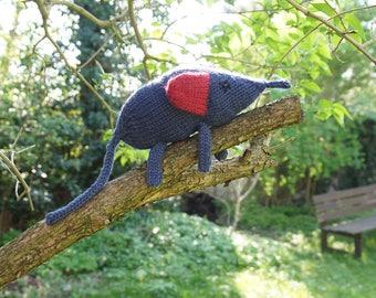 Blue elephant-shrews round ear / blue r