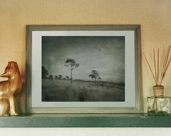 CountrysideTrees, Fine Art Photography , Lone Trees, Blue, Green, Landscape Tree Decor