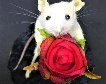 Valentine's Taxidermy Mouse