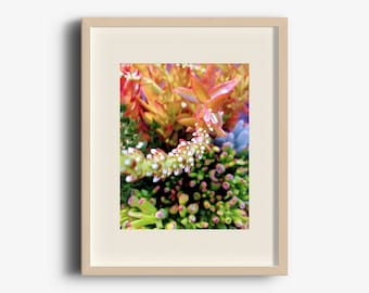 Botanical #8, Bright Succulents, Digital Download, Wall Art, Printable Photo, Nature Photography, Home Decor, Fine Art, Botanical, Abstract