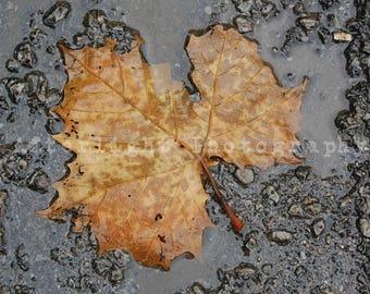 Fall Leaf Photograph, Seasonal Photography,