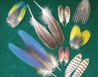 Feathers in pair. Cruelty free
