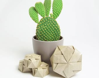 Wedding or party favours, cactus, grey, gray, concrete raw umber