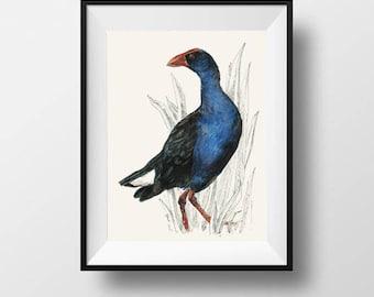 Mr Pukeko, New Zealand native bird illustration, Large print from original watercolor and ink painting artwork, Wild life wall art