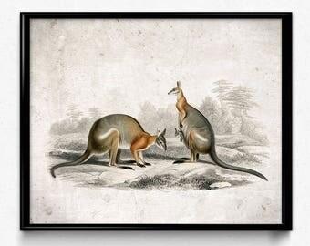 Kangaroo Outback Vintage Print - Kangaroo Poster - Kangaroo Art - Living Room Decor - Living Room Art - Nursery Decor - Orbigny