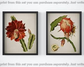 Vintage cactus print set, Prints for kitchen, Printable botanical set, Set of 2 cactus prints, Cactus fruit, Cactus flower, Antique wall art