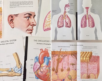 Vintage Medical Illustrations Lot 1 - Anatomy  -1960's