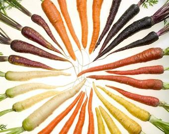 500 RAINBOW CARROT MIX White Red Yellow Purple Orange Daucus Carrota Seeds *Flat Shipping