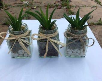 Aloe black gem plant gift / favour in square glass jar