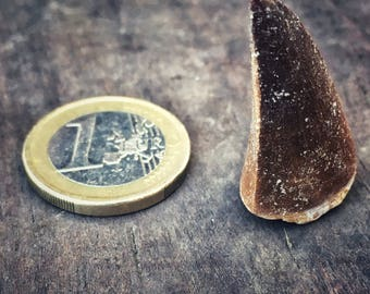 Amulet Fossil Mosasaurus Tooth