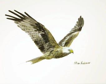ORIGINAL watercolor painting, Eagle watercolor, Bird watercolor, Flying bird, Flying eagle watercolor, Eagle painting