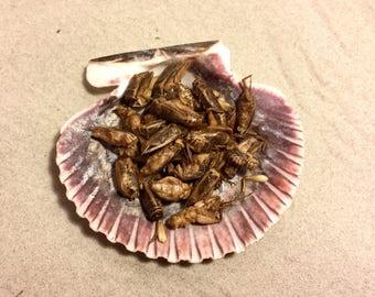 Crickets ~ Hermit Crab Food