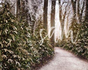 Christmas Tree Farm Digital Background, Christmas Backdrop, Christmas Background, Christmas Overlay, Christmas PNG, Winter, Snow, Sunset