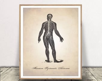 Central Nervous System INSTANT DOWNLOAD , Human Anatomy PRINTABLE, Nervous System Download, Medical Illustration Print, Human Anatomy Print