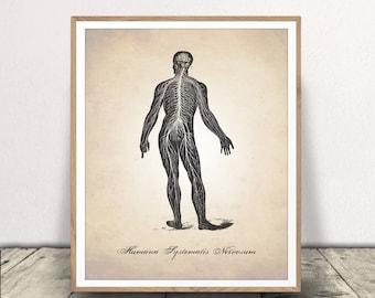 Central Nervous System INSTANT DOWNLOAD , Human Anatomy PRINTABLE, Nervous System Download, Medical Illustration Print, Human Anatomy Print