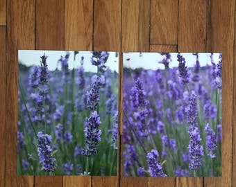Lavender Field | Cleveland, OH 8x10