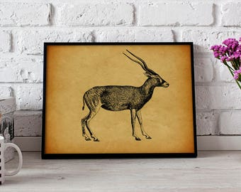 Antelope Animal Vintage poster, Antelope Animal wall art, Antelope Animal wall decor, Antelope Animal print
