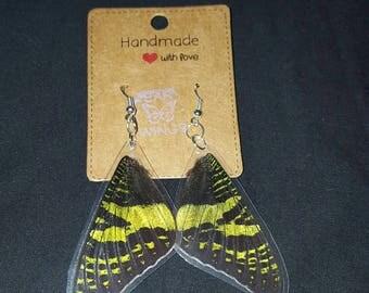 Sunset Moth Earwings