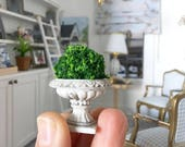 Miniature Topiary in French Urn - Dollhouse Garden - Fairy Garden - Dollhouse - Diorama - 1:12 scale