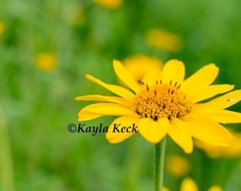 Yellow Spring Flower Digital Download Photography