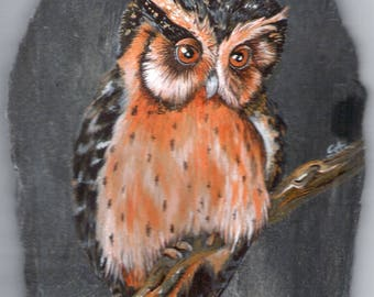 pet portrait of the OWL from Asia acrylic painting on Slate