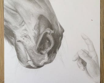 ORIGINAL PENCIL DRAWING of horse muzzle and hand.